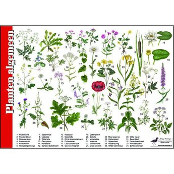 Tringa paintings Natuur zoekkaartenn Planten algemeen