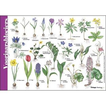 Tringa paintings Natuur zoekkaarten Voorjaarsbloeiers
