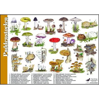 Tringa paintings Natuur zoekkaarten Paddenstoelen