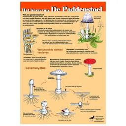 Tringa paintings Herkenningskaarten Het leven van de paddenstoel