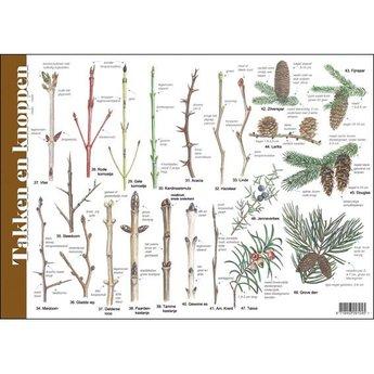 Tringa paintings Natuur zoekkaarten Takken en Knoppen