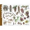 Tringa paintings natuurkaarten Herkenningskaarten Noten, zaden, vruchten