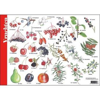 Tringa paintings Natuur zoekkaarten Noten, zaden, vruchten