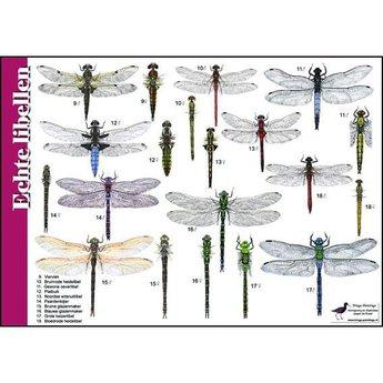 Tringa paintings Natuur zoekkaarten echte libellen en juffers