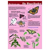 Tringa paintings Herkenningskaarten Help de dagvlinder