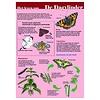 Tringa paintings natuurkaarten Herkenningskaarten Help de dagvlinder