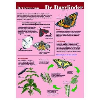 Tringa paintings Natuur zoekkaarten Help de dagvlinder