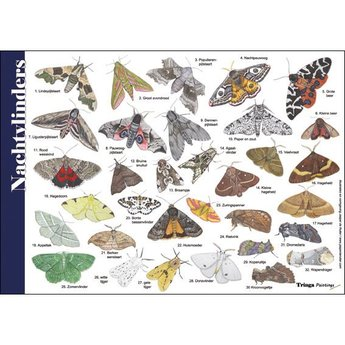 Tringa paintings natuurkaarten Natuur zoekkaarten Nachtvlinders