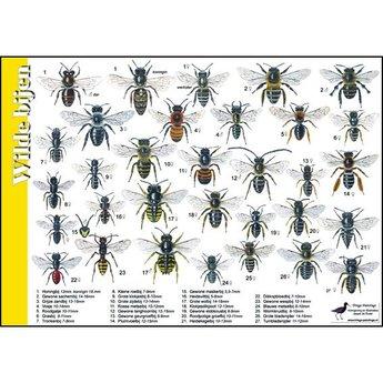 Tringa paintings Natuur zoekkaarten Wilde bijen