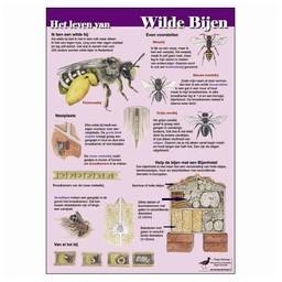 Tringa paintings natuurkaarten Herkenningskaarten Het leven van wilde bijen