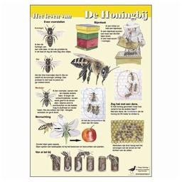 Tringa paintings natuurkaarten Herkenningskaarten Het leven van de Honingbij