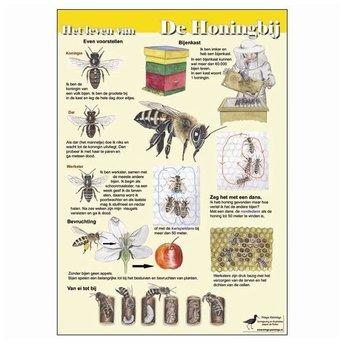 Tringa paintings Natuur zoekkaarten Het leven van de Honingbij