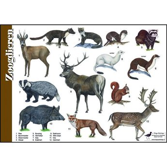 Tringa paintings Natuur zoekkaarten Zoogdieren