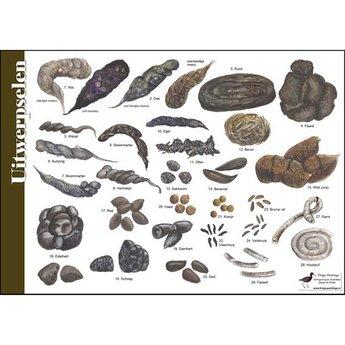 Tringa paintings Natuur zoekkaarten Poepkaart