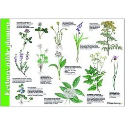 Tringa paintings Herkenningskaart Eetbare wilde planten