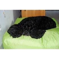 Hondenbed Small Lime nylon
