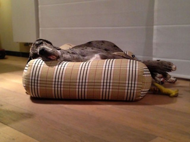 Country field hondenkussen geweven dog s companion