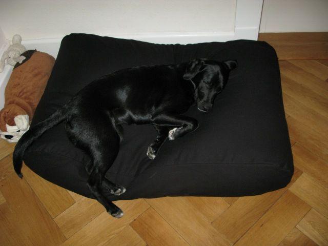 Dog's Companion� Hondenbed zwart