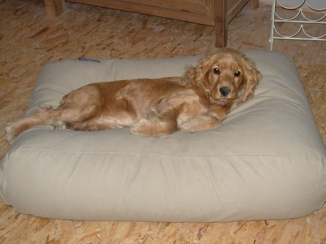 Dog's Companion� Hondenbed beige