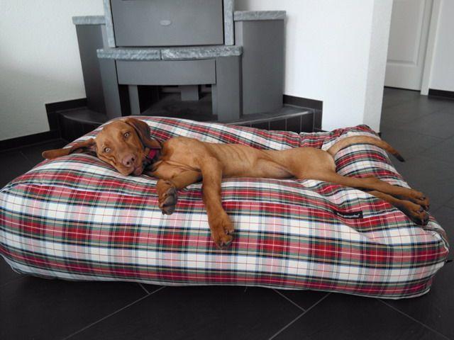 Dog's Companion� Hondenbed dress stewart