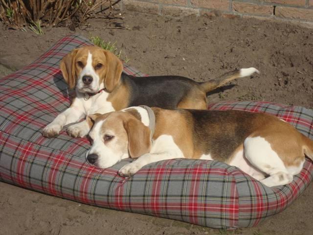 Dog's Companion® Hondenbed large scottish grey
