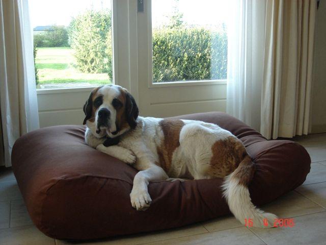 Dog's Companion® Hondenkussen medium chocolade bruin