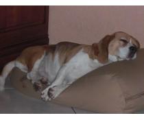 Dog's Companion® Hondenbed extra small camel