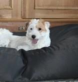 Dog's Companion® Hondenbed medium zwart vuilafstotende coating