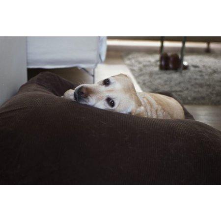 Dog's Companion® Hondenbed superlarge chocolade bruin ribcord