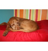 Dog's Companion® Hondenbed small rood ribcord