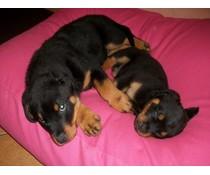 Dog's Companion® Hondenkussen extra small roze