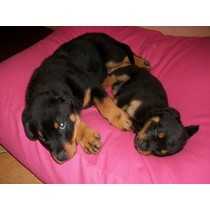 Hondenkussen roze extra small