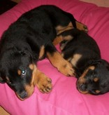 Dog's Companion® Hondenkussen superlarge roze