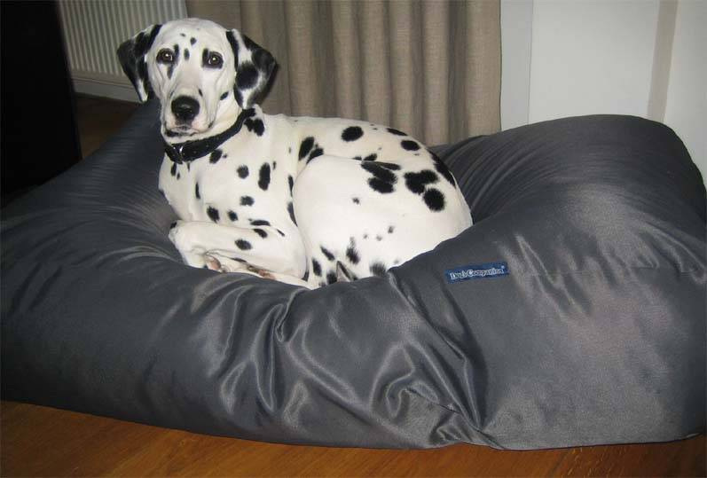 Dog's Companion® Hondenbed small charcoal vuilafstotende coating