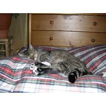 Kattenkussen dress stewart 55 x 45 cm