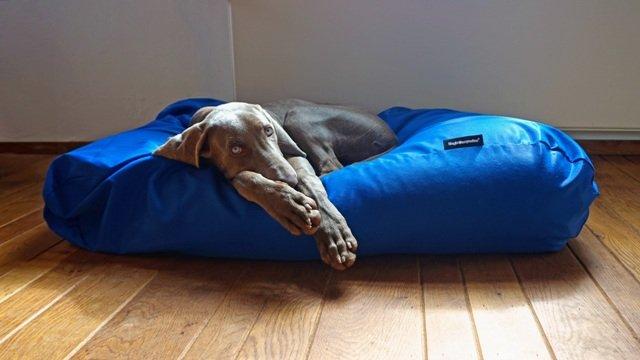 Hondenkussen kobalt blauw vuilafstotende coating large dog s