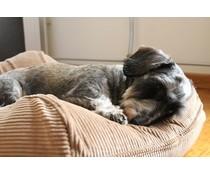 Dog's Companion® Hondenbed extra small camel ribcord