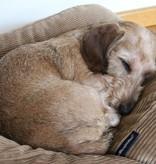 Dog's Companion® Hondenbed superlarge camel ribcord