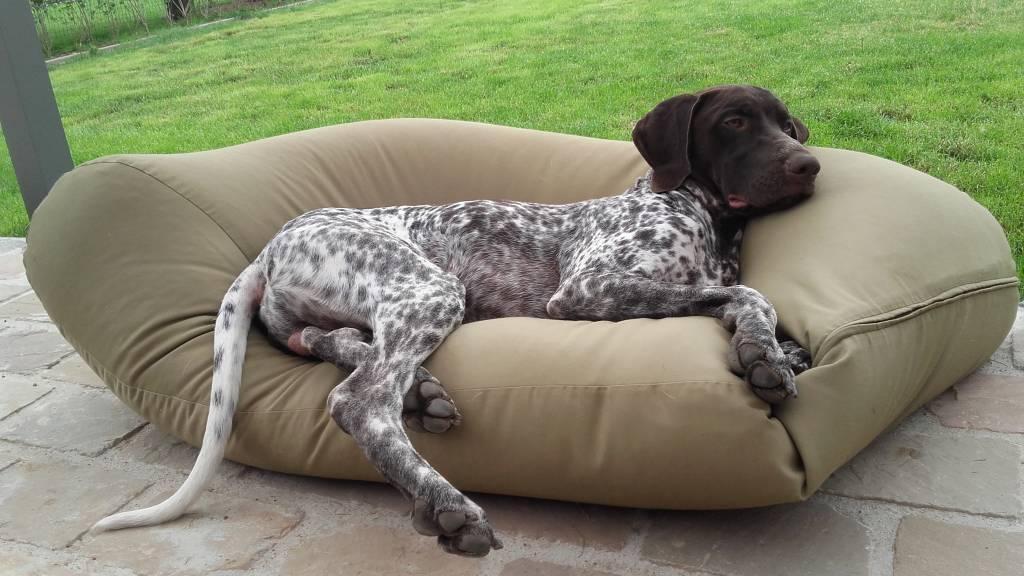 Dog's Companion® Hondenkussen khaki vuilafstotende coating small