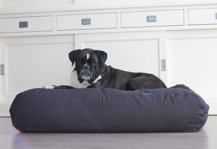 Dog's Companion® Hondenbed extra small antraciet