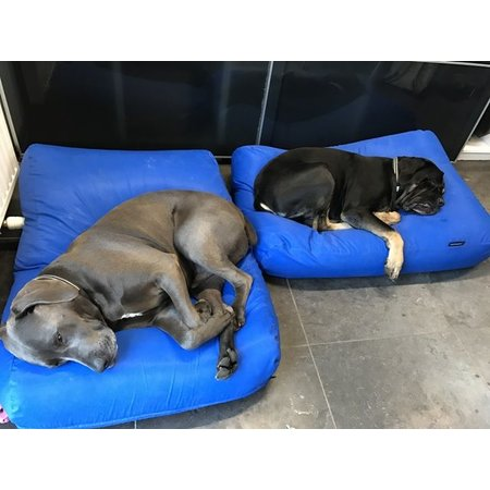 Dog's Companion® Hondenkussen kobalt blauw vuilafstotende coating large
