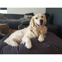 Hondenbed medium antraciet