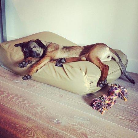 Dog's Companion® Hondenkussen khaki vuilafstotende coating superlarge