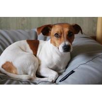 Hondenkussen lichtgrijs medium