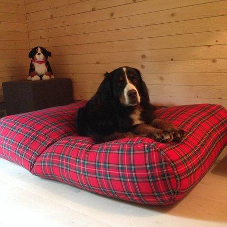 Dog's Companion® Hondenbed royal stewart medium
