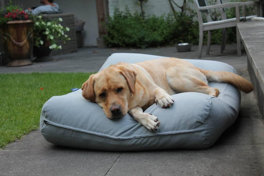 Dog's Companion® Hondenkussen lichtgrijs large
