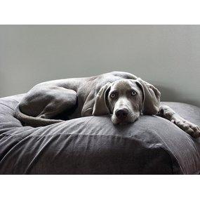 Dog's Companion® Hundebett Mausgrau (Cord) Small