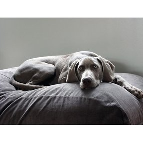 Dog's Companion® Hundebett Mausgrau (Cord) Large