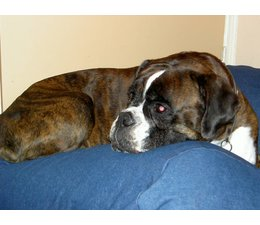 Dog's Companion® Dog bed Jeans