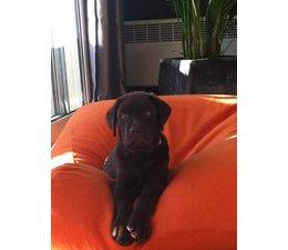 Dog's Companion® Dog bed Orange